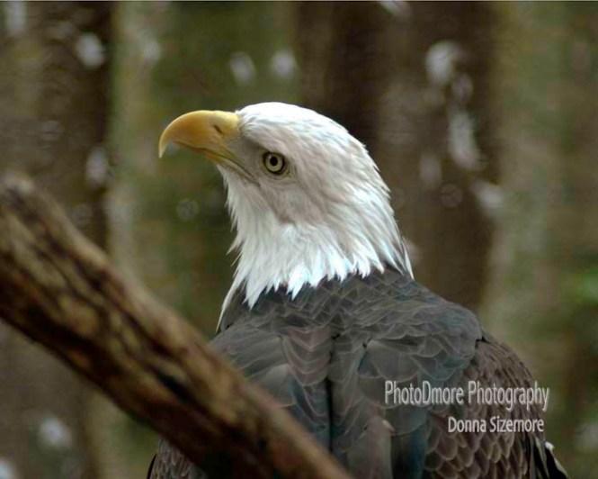 Eagle1_002